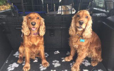 Alfie & Ollie