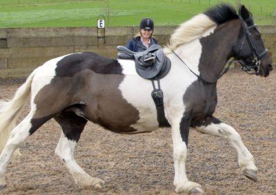 spirit of pegasus homepage slide horse